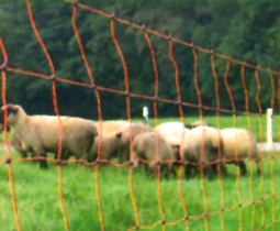 Sheep netting
